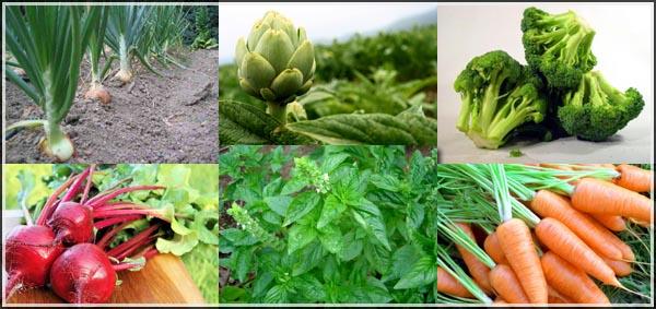 plantas-saludables